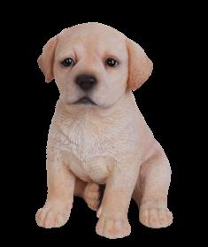 Labrador Welpe, hellbraun