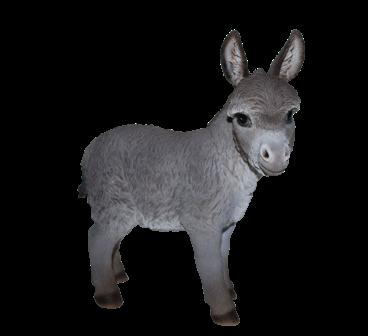 Esel-Baby