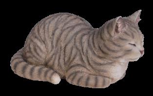 Träumende Katze, graugetiegert